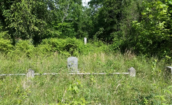 Evergreen Cemetery as seen with severe overgrowth due to lack of maintenance