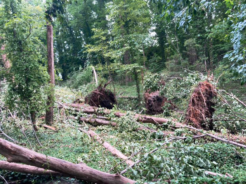 tress down in East End and Evergreen Cemeteries